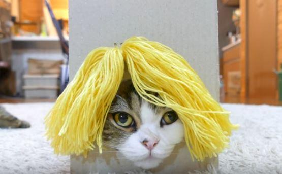 maru the cat 4