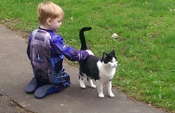 little boy petting cat