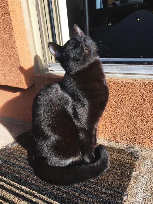 black cat enjoying sun