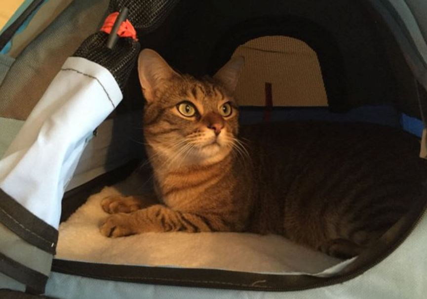 cb5875275e You can now buy teeny tents for your cats to camp out in (Gallery)