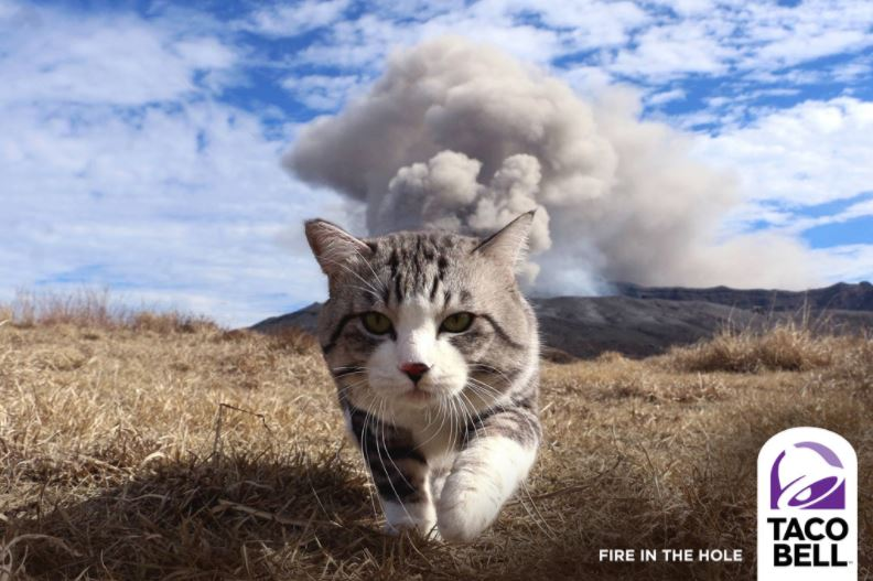 cat explosion photoshop 7
