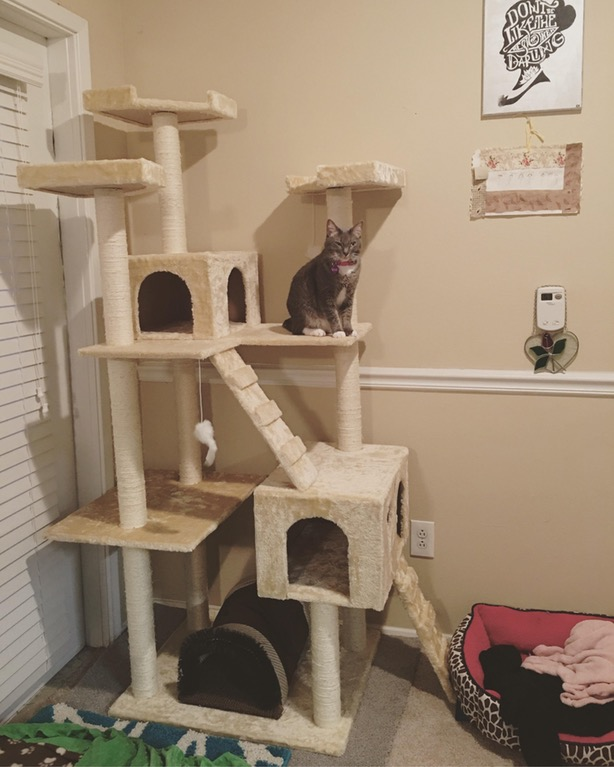 queen gracie in her palace