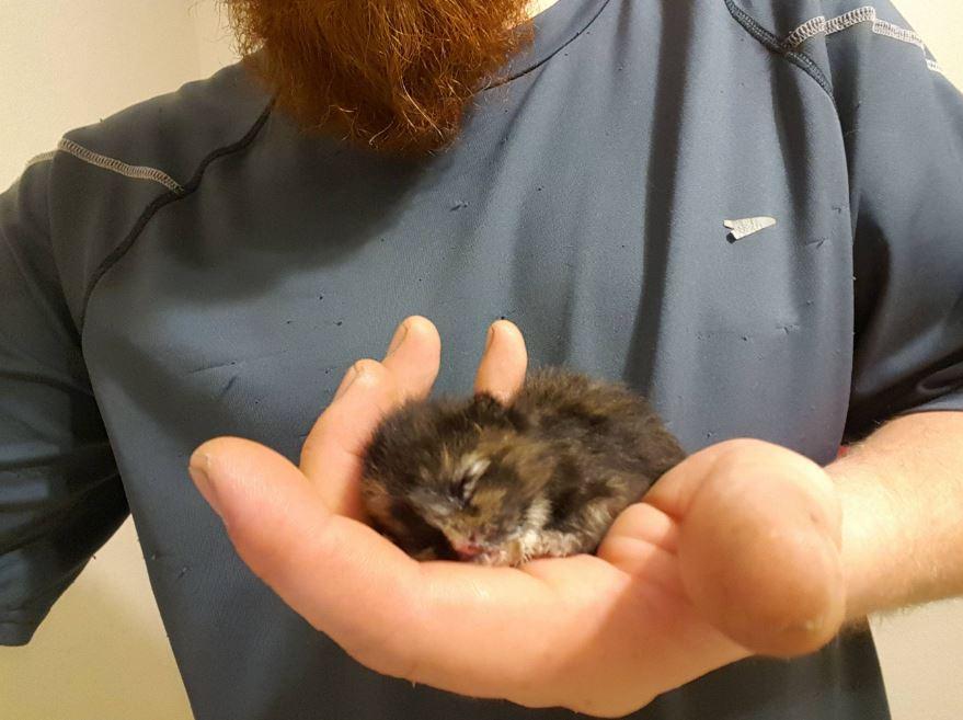 moogy the tortie kitten held in palm of hand