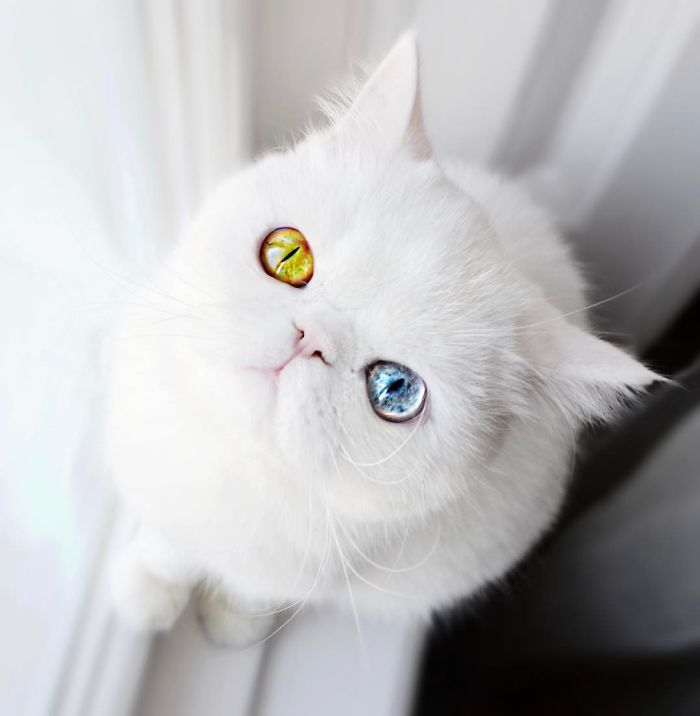 pam pam the cat 3