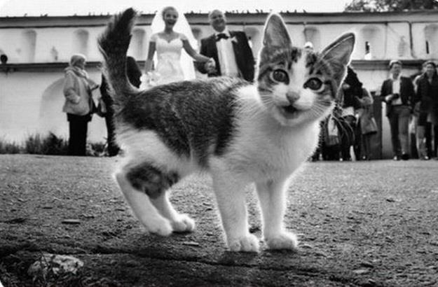 kitten black and white wedding photobomb