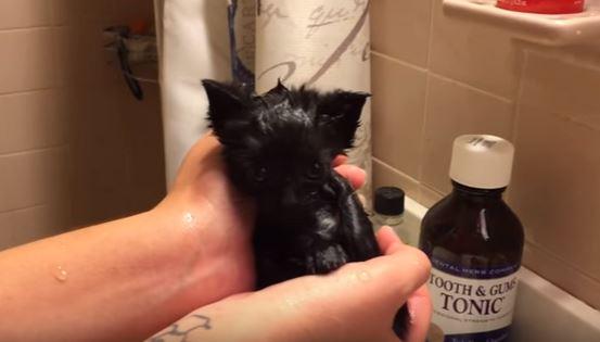 omg black cute kitten