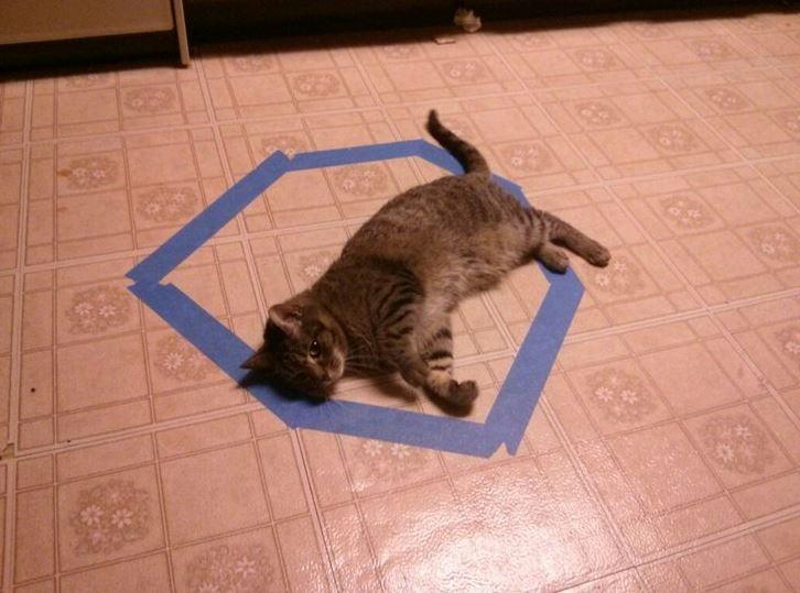 cat trap 14