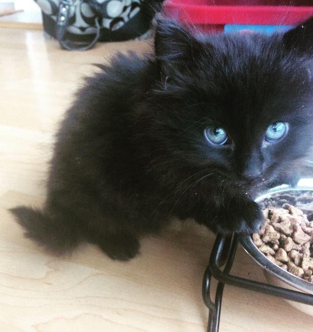 teeny black kitten