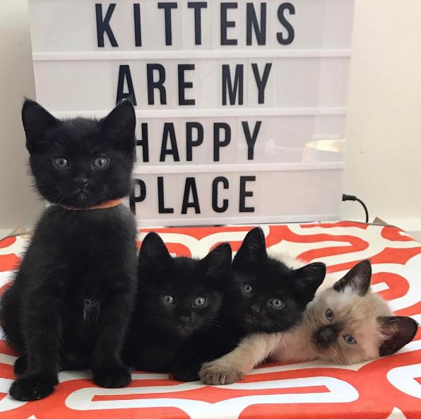 kittens are my happy place