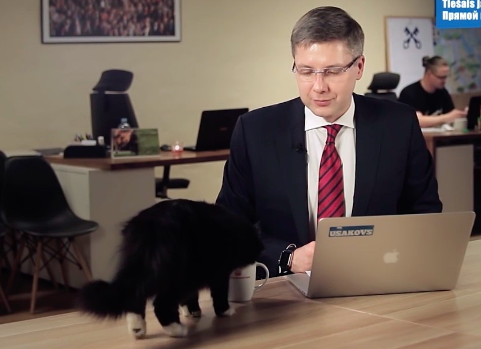mayor interrupted by cat