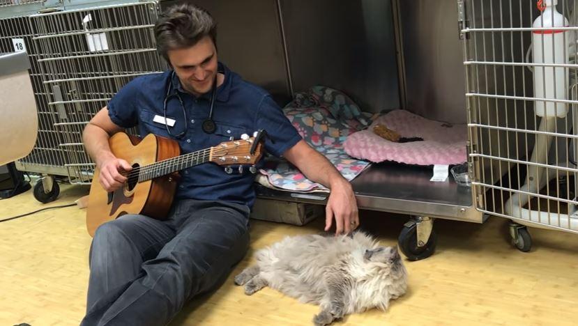 cat likes vet singing