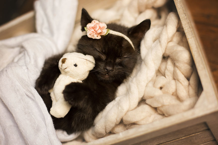 kitten baby photo shoot 2