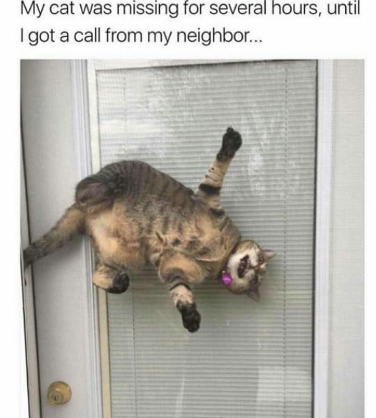 cats vs screen doors 6