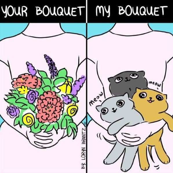 relatable cat bouquet comiic