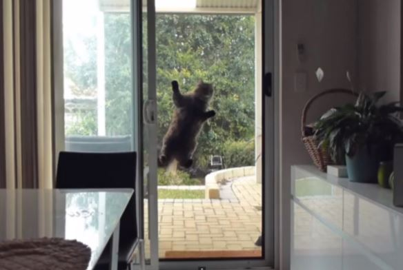 cats vs screen doors 3