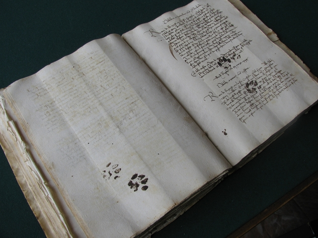 old manuscript with cat paws on it