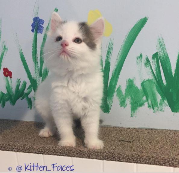 clover the kitten