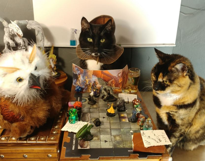 dungeons and cats