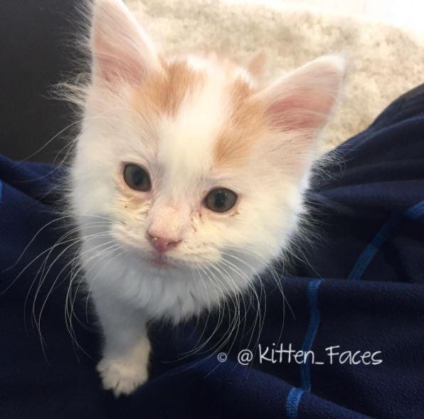 paddy the kitten