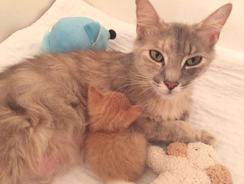grieving mother cat and orphaned kitten happy