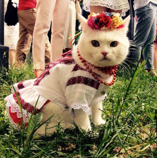 happy cat friday 19