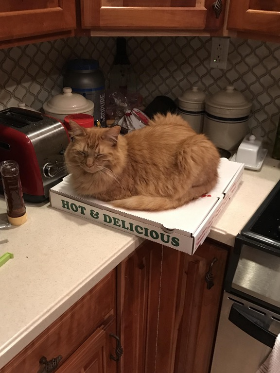 cat on pizza 13