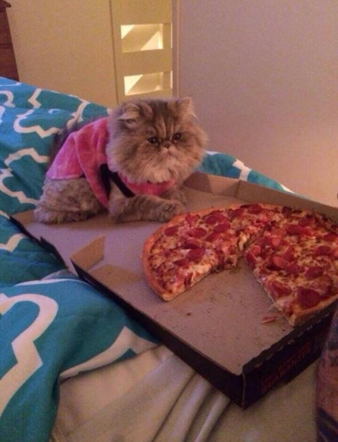 cat on pizza 16