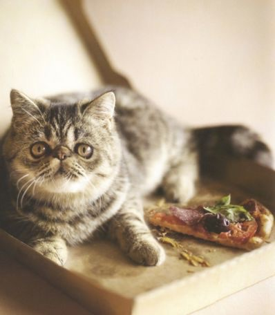 cat on pizza 5