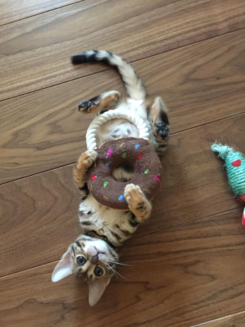 kitten with toy donut