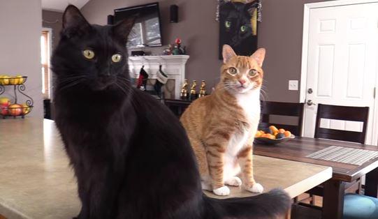 cat videos