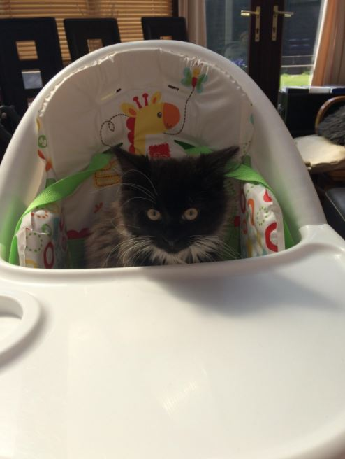 kitten in a high chair