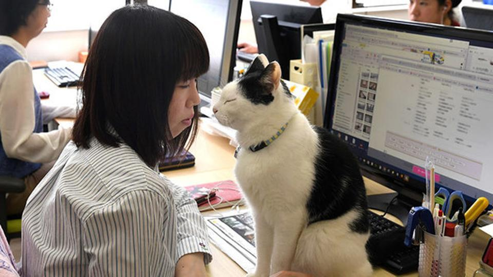 cats in the workplace japan