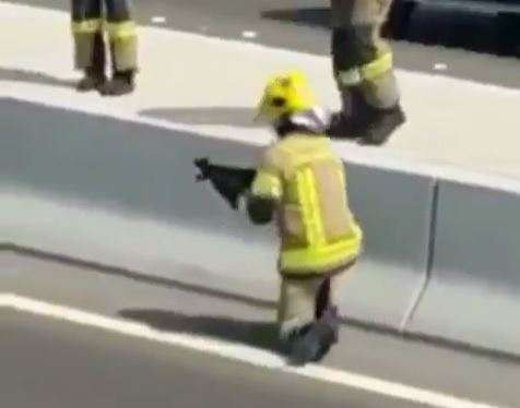 firefighter picking up cat from highway