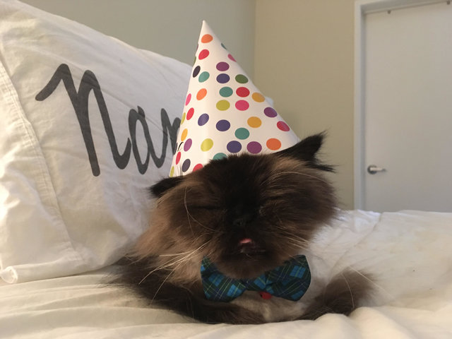 senior cat birthday 4