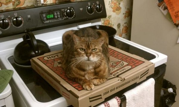 cat on pizza 11