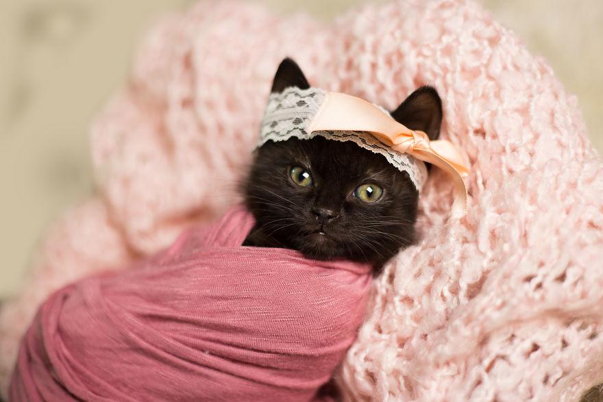 kitten baby photo shoot 4