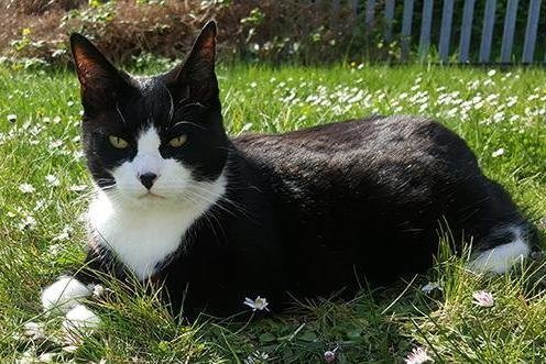 felix the cat from the royal london docks