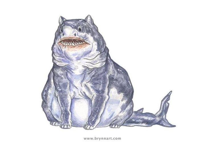cat shark 5
