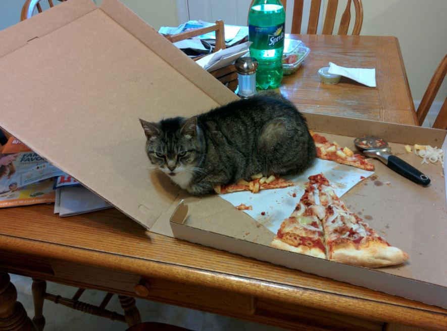 cat on pizza 1