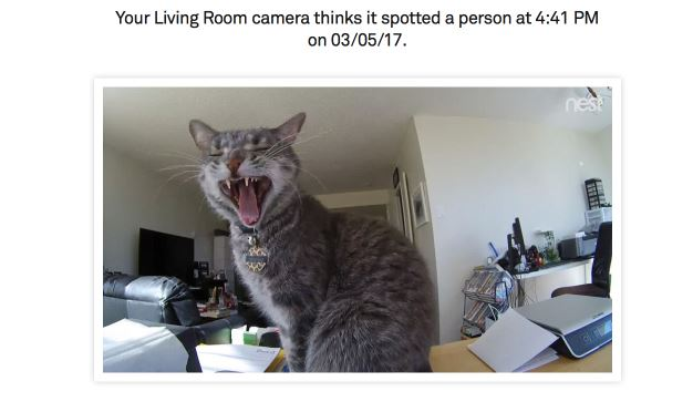 cat caught on living room camera