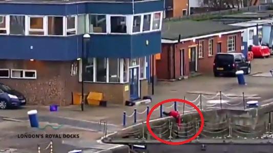 london docks cat rescue