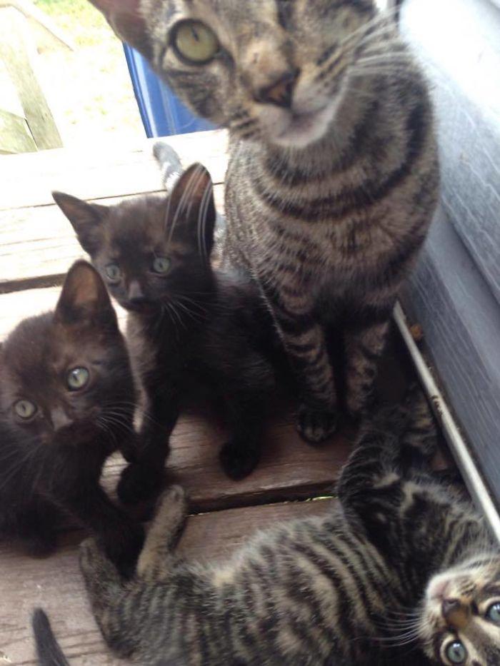 camp cat family