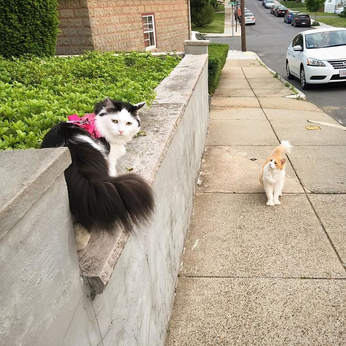sophie and scottie on a walk