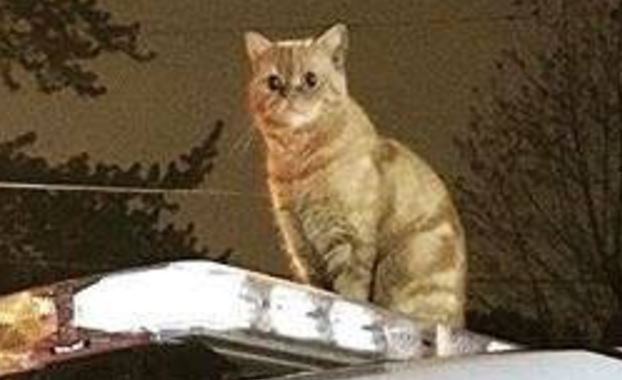 cat zoomed in on top of police car