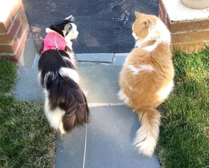 scottie and sophie on a walk