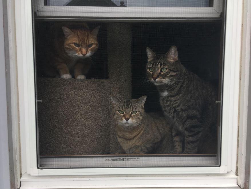 squad goals cats