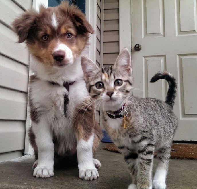 cat and dog best pals