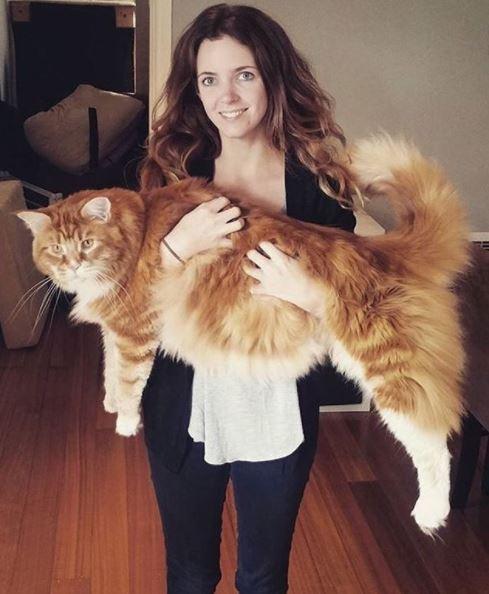 worlds longest cat 2