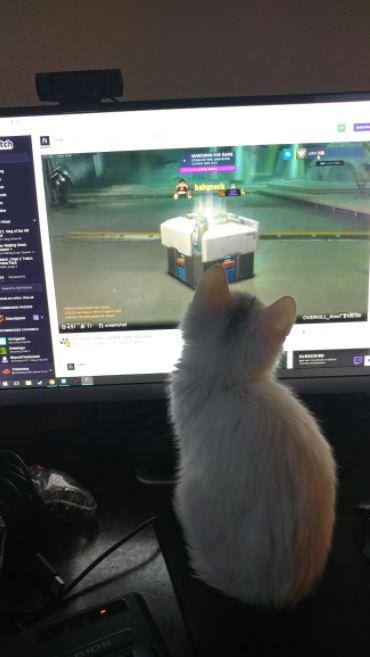 shiro the kitten 3