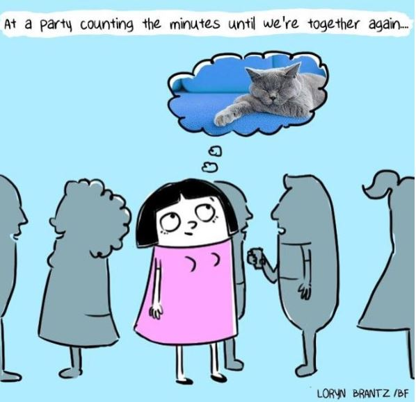 relatable cat comic party
